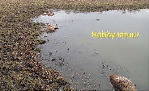 Hobbynatuur